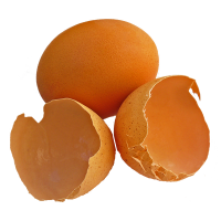 10 Uses For... Eggshells