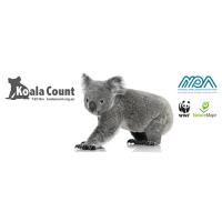 Help Count Koalas for Conservation
